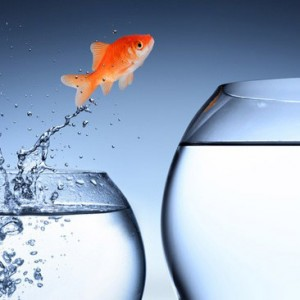 promotion_fish_Crop